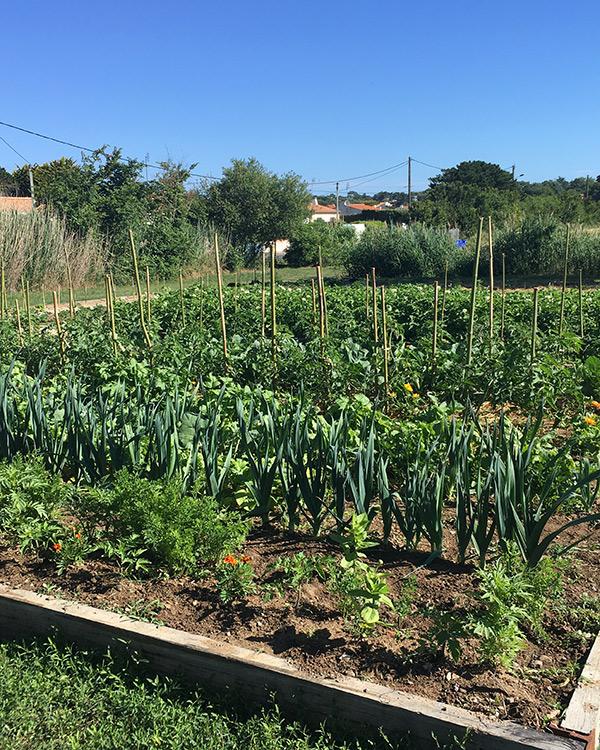 Le jardin potager du Marais Girard