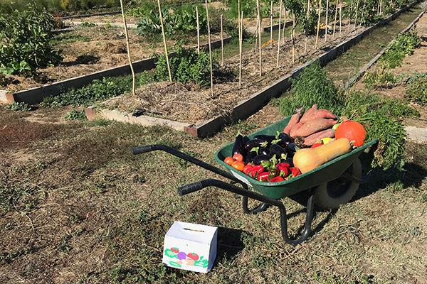 La brouette de Marylou dans son jardin potager